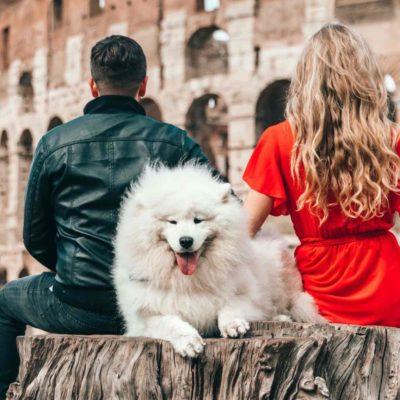 a white dog